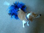 Glam Dog (Blue & Black Blended)