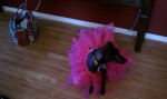 Glam-Runner-Pink-Black-Dog-Tutu