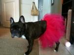 Glam-Runner-Pink-Dog-Tutu-Prancing