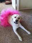 Glam-Runner-Pink-Lab-Tutu