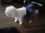 Glam-Runner-Purple-Black-Dog-Tutu