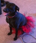 Glam-Runner-Red-Black-Dog-Tutu-3