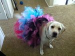 Glam-Dogs-Dog-Tutu