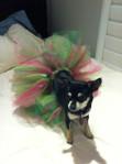 Pink-Green-Dog-Tutu-1